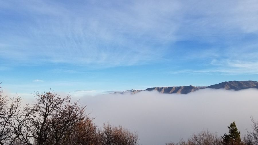 Tree No People Nature Sky Blue Outdoors Cloud - Sky Tranquility Day Beauty In Nature Water Scenics Mountain Range Looking Down On The Clouds Foggy Lake Foggy Morning Bare Trees Pineview Dam Huntsville Utah Mountain Fog Rising Beauty In Nature Fog In The Trees Fog