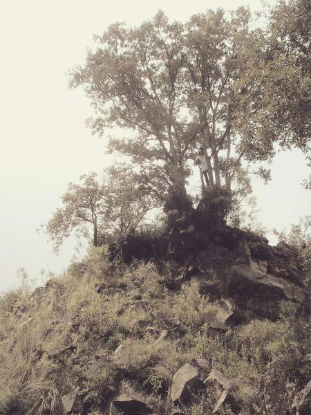 So High Tripiante Happyday TreePorn Lostplaces