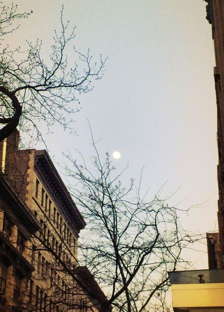 This evening, by the museum. Random Moon New York Winter Trees