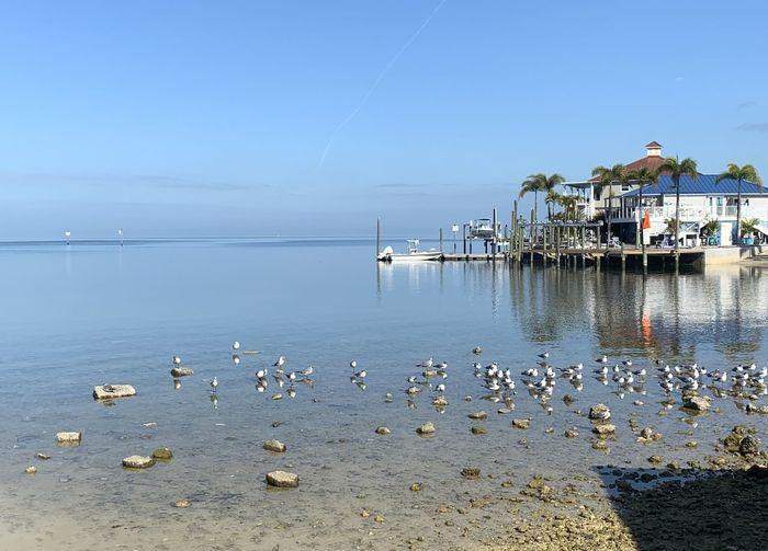 Seagulls on sea shore against sky