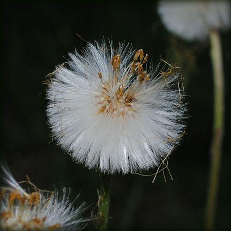 Flower Fragility Nature Freshness Russia Россия Lmd лмд LakiMirazh лакиМираж Color Macro макро цветы цвет серпухов Serpukhov