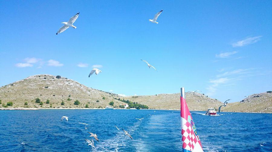 Pakoštane Croatia Seagulls Boat Sea Landscape Mobilephotography