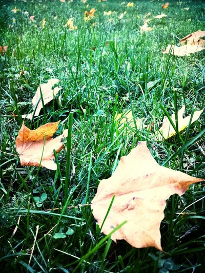 Melancholic Landscapes Autumn Leaves My Photography Vision Visionary Eye