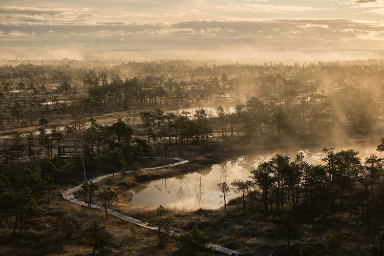 Wooden trail leading through bog in latvia surrounded by junipers and pines, misty autumn morning