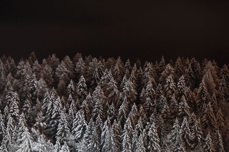 Night Nature Tree Snow Outdoors Beauty In Nature No People Winter Tranquility Scenics Mountain Range