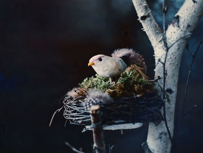Artificial Bird On Nest At Night