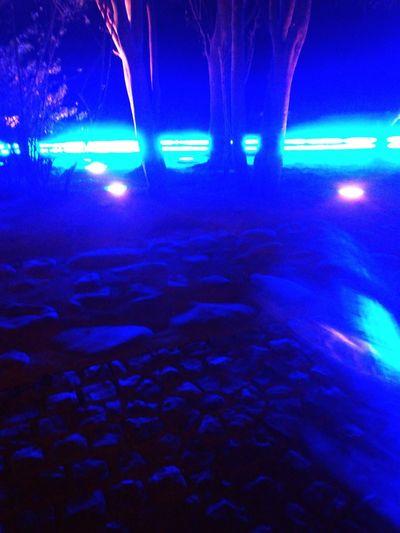 Blues Night Photography Nature&art Lights