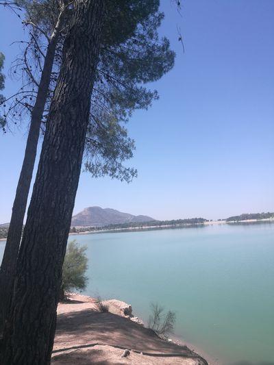 Tree Water Blue