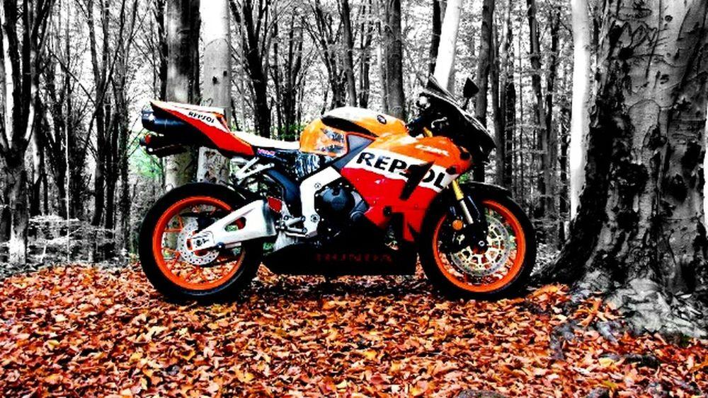 ıstanbul Yaprakdokumu Kemerburgaz Motorcycles Motorbike Motor Orman Gezmeler Gunes