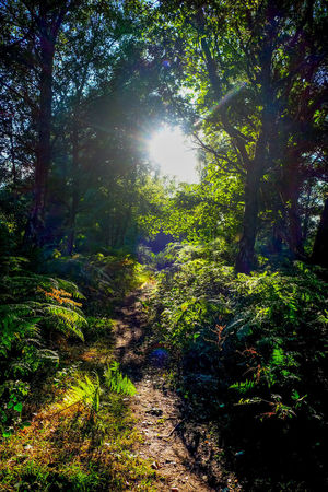 Wood WoodLand Beauty In Nature Chailey Chailey Common Day Forest Forestwalk Green Color Growth Land Lens Flare Nature No People Outdoors Plant Sky Sun Sunbeam Sunlight Tranquil Scene Tranquility Tree WoodLand Woods