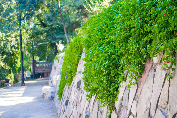 Architecture Beauty In Nature Close-up Day Green Color Growth Ivy Nature No People Outdoors Plant Tree