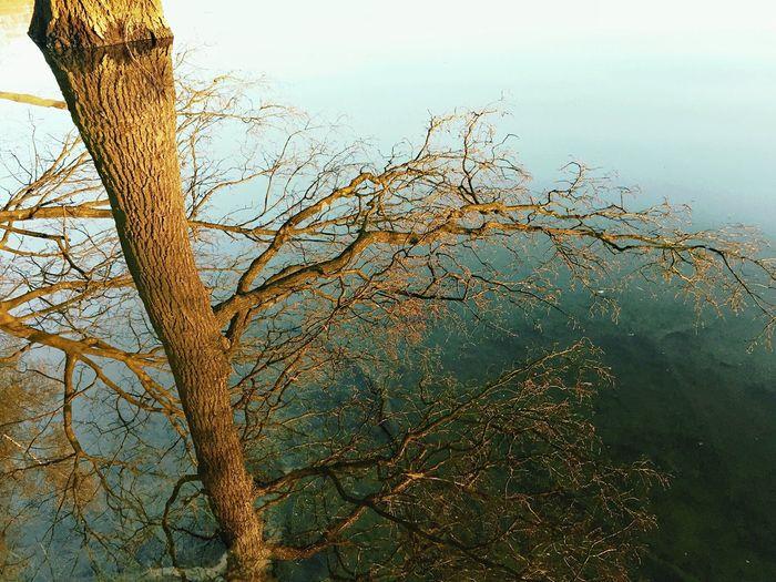 •treeflection•
