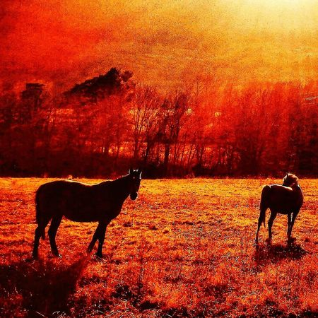 Sol de Desembre Horses EyeEmNewHere Sunset Animal Themes Mammal Silhouette Animal Wildlife Animals In The Wild No People Day Nature Outdoors