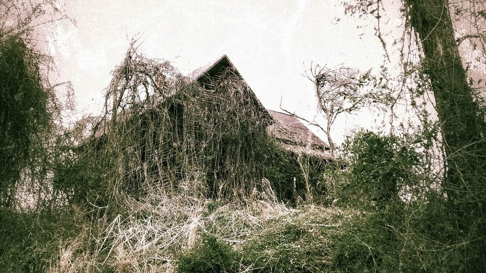 This ole house. EyeEm_abandonment Learning From Nature Creative Power Fairytales & Dreams Looking Into The Future Dark Fairytale Not Strange To Me