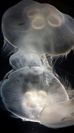 Tennessee Aquarium Jellyfish Nature Eyem Best Shots Eyem Nature Lovers