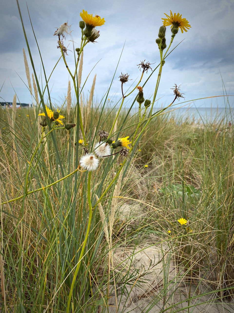 CLOSE-UP OF FLOWERING PLANTS ON LAND