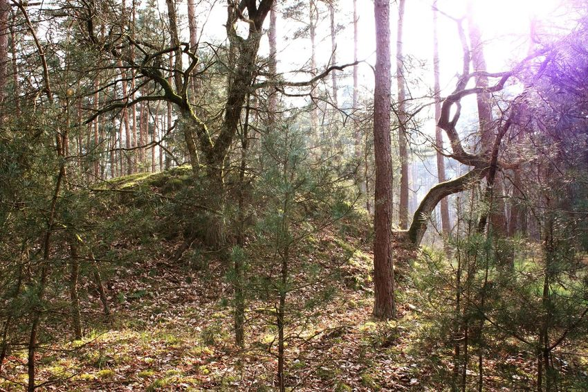 Wood WoodLand Inthewoods Trees Arbres Bäume Sun Soleil Sonne Niceday