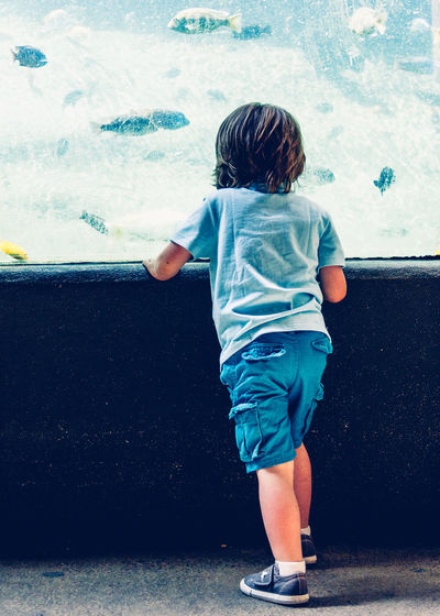 Rear View Of Boy At Aquarium