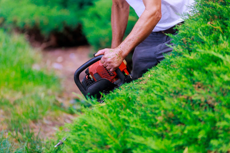 Midsection of man using hedge clippers by plant