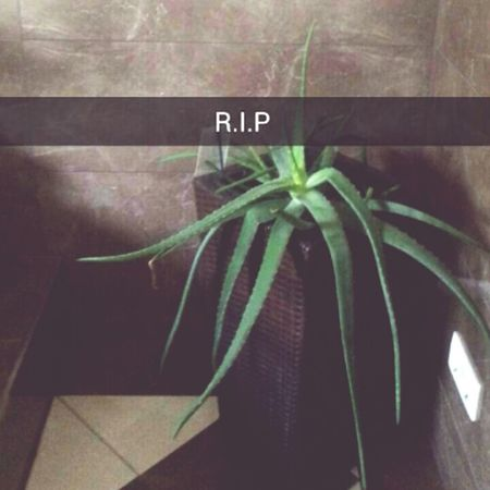 I Dont Know Why I Dont Care Plantography :-( R.I.P