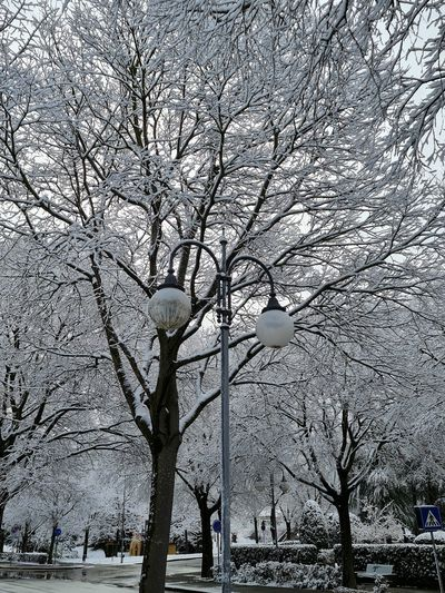 Low angle view of street light against bare trees in winter