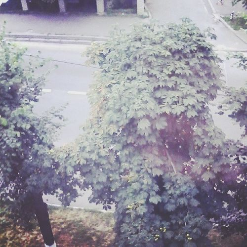 Road Trees Window