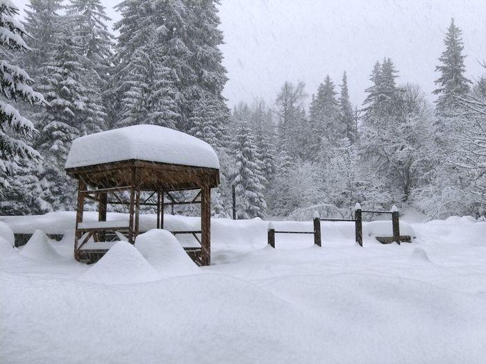 Quiet snowing