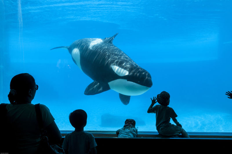 Silhouette of people  with whale  swimming in aquarium