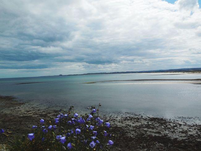 Lindisfarne England Berwickupontweed Hiking Backpacking Flower Blue Flowers Beach Sea Sea And Sky Water View Gorgeous Landscape