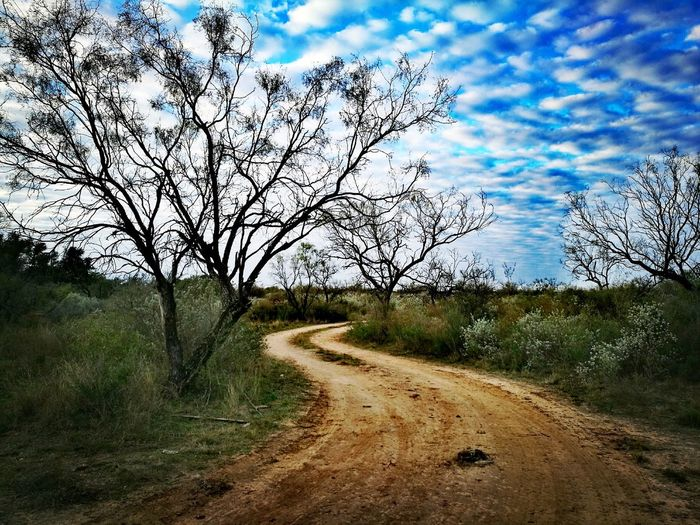 Road Sky Cloud - Sky Tree Nature Outdoors Beauty In Nature Tranquility No People Landscape Day Growth Scenics The Way Forward Road Close-up Coahuila, México HuaweiP9Photography Oo Huawei P9 Leica Huaweileica Huawei EyeEm Best Shots EyeEm Nature Lover HuaweiP9 EyeEmNewHere