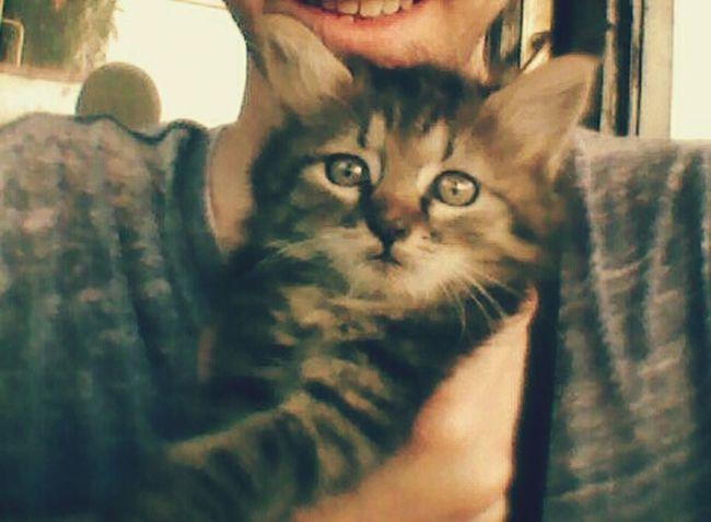 Cat♡ Cat Cat Lovers Cat Eyes