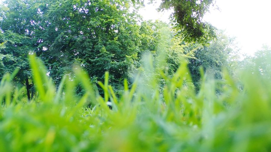 Nature Growth Green Color Beauty In Nature Drop Outdoors Spider Web Freshness No People Tree Water Day Plant Grass Fragility Close-up Sky Buglife Bugview Lost In The Landscape EyeEmNewHere Connected By Travel Perspectives On Nature