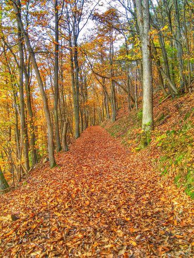 Herbst In Seinen Schönsten Farben Klingenberg Leafs Of Fall Walking Around