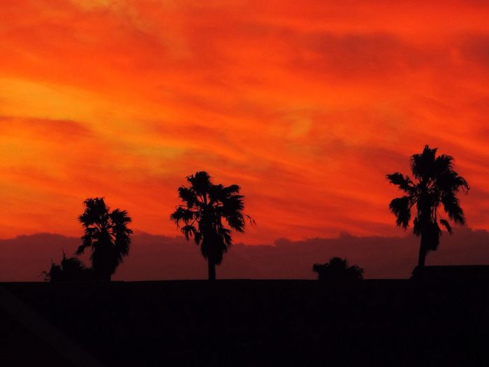 Silhouette Palms Silhouette Palms Strand Red Sunset Rooftops Crimson Sky Tranquil