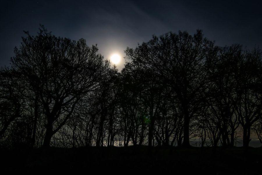 Moon Lights Up The Night Moon Light Shadow Moon Light Moon Tree Plant Silhouette Sky Growth Beauty In Nature Tranquility Idyllic Forest Non-urban Scene Nature Low Angle View No People Tranquil Scene Scenics - Nature Land Outdoors Branch