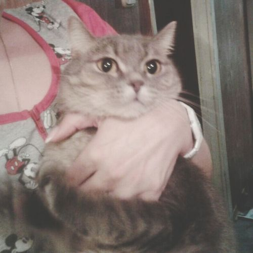 Cat Barsik
