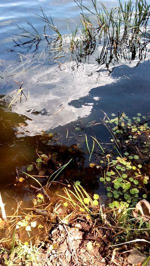 Калужская область калуга калуга24 калуга40 калугасити озеро вырка лето