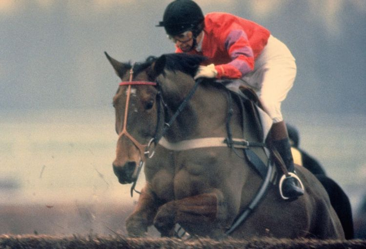 Princess Anne Riding Cnoc Na Cuille at Kempton Park. Riding in a race over jumps for the first time, Princess Anne approaches the fence on her ten-year-old mount, Cnoc Na Cuille; in the Portland Handicap Chase at Kempton Park, in February 1987. http://pics.travelnotes.org Colours Determination Eyes Fences Focus Object Horse Horse Riding Jockey Jump Jumping Kempton Park Michel Guntern Photography In Motion Princess Anne Princess Royal Racing Riding Royal People And Places Sports Photography Travel Travel Photography Travel Photos Travel Pics Up Close Street Photography