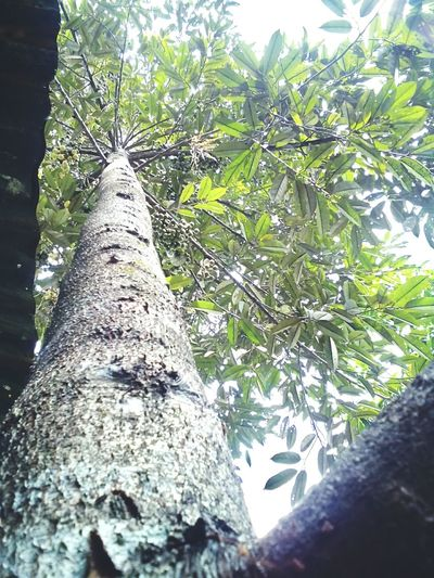 Durian tree Photooftheday Color Portrait Relax Colorsplash Nature Mothernature Tropical Fruits