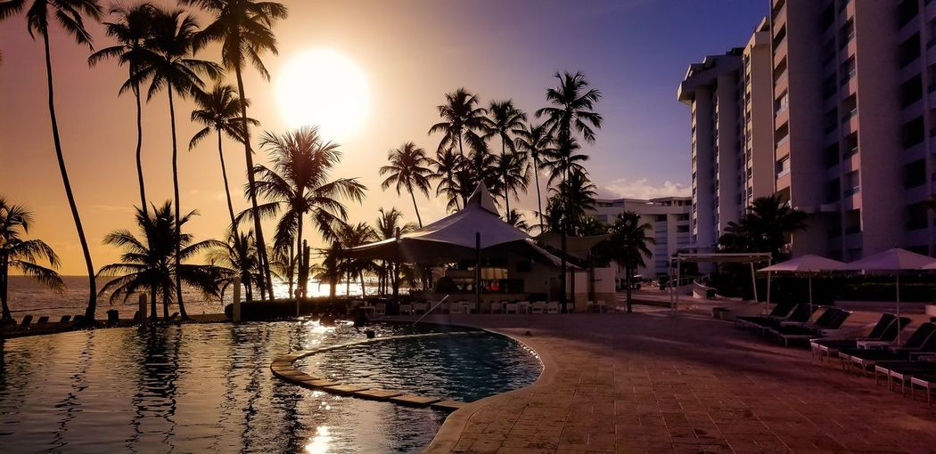 Sunset Palm Tree Architecture Water Built Structure Sunset Building Exterior Swimming Pool Sky Tree Sun Beach Sea Sunlight No People Vacations Outdoors Day Nature Been There. Sand Shells Sunlight Beauty In Nature Travel Vacations