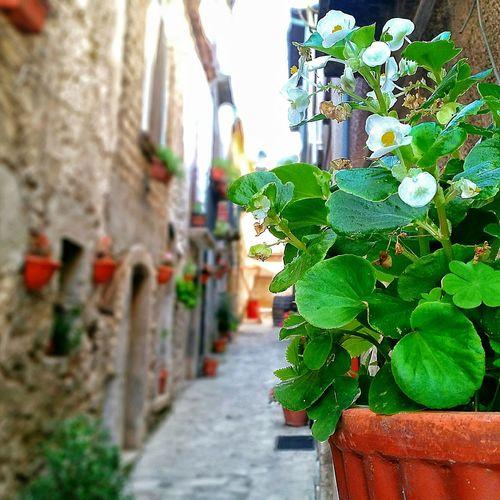 Италия улицы италии Taurasi средневековый итальянская деревня Relax