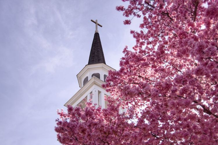 Low angle view of cherry blossoms on building against sky