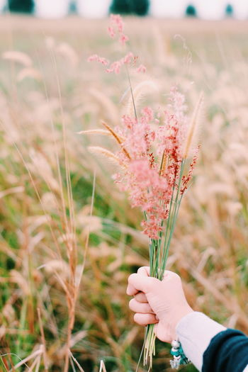 Hand holding flowering plant at field