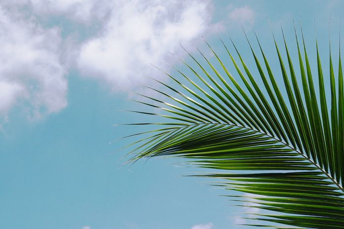 Copy space ,coconut leaf and blue sky vintage color toned and stylized Stylized Vivid Colours  Palm Leaf Nature Palm Tree Leaf Beauty In Nature No People Sky Day Outdoors Frond Growth Close-up Tree Freshness