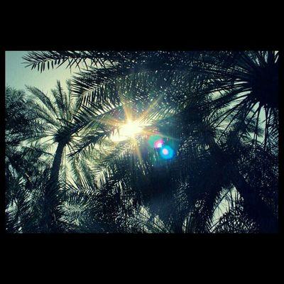 تصويري  نخيل مزرعة Farm Palms Squaready Canond6000 Canon