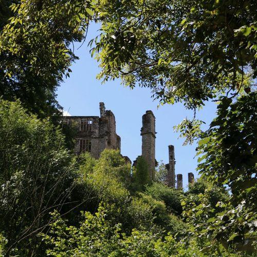 Castle Wood