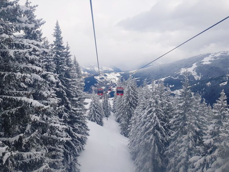 Trees Snow Mountain Cold Temperature Winter Ski Holiday Overhead Cable Car Pinaceae Pine Tree Mountain Range