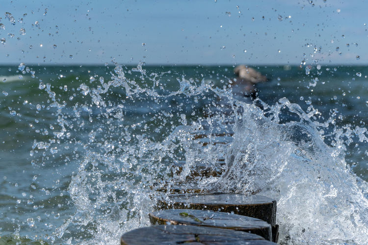 Nature Day Outdoors Summer Water Motion Sea Wave Beauty In Nature Sky Horizon Seagull Wood Baltic Sea Ocean Splashing