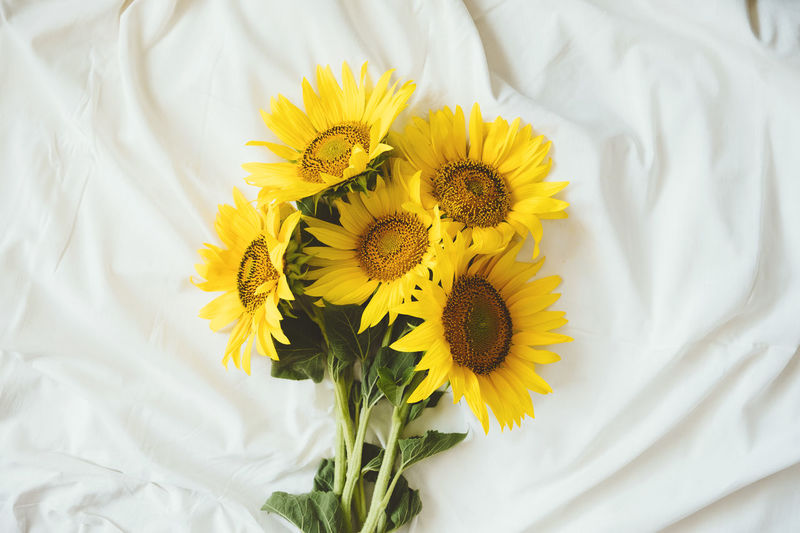 High angle view of yellow flower on bed