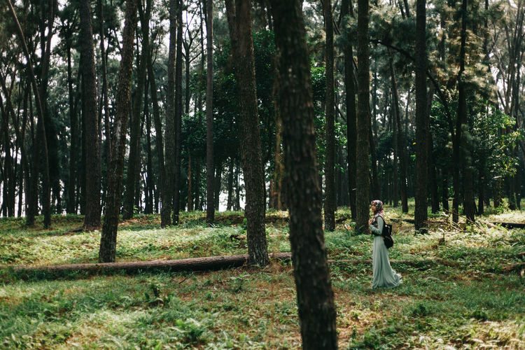 Beautiful traveler women walking path through in her life. Beautiful scenery of pine tree. Adult Beautiful Nature Beautiful People Beauty Beauty In Nature Fashion Forest Girl Lanscape Leaves Nature Outdoors People Pine Portrait Portrait Of A Woman Smiling Travel Travelling Tree Walking Women Young Women